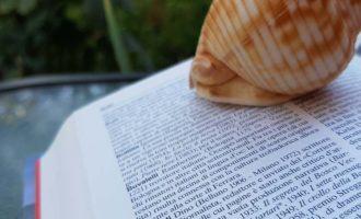 Il colombre, racconto fantastico di Dino Buzzati, argomento di italiano terza media - Homework & Muffin