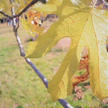 I colori dell'autunno, foto di Gabriella Rizzo | Homework & Muffin