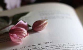 La pioggia nel pineto - G. D'Annunzio, approfondimento per gli alunni del III anno della Sc. Sec. di I grado a cura di Gabriella Rizzo | Homework & Muffin