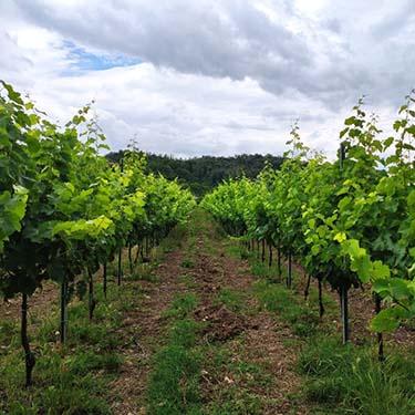 Incontro e Lumen, vini Merlot e Chardonnay dell'Azienda Agricola Vigna Vecchia di Costantino Veronese, a cura di Gabriella Rizzo | Homework & Muffin