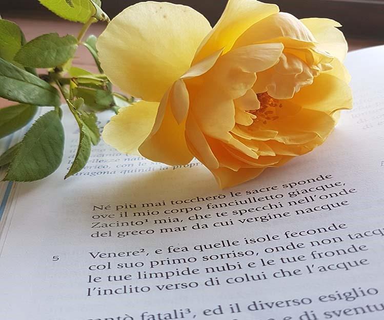 A Zacinto di Ugo Foscolo, argomento di italiano terza media - Homework & Muffin
